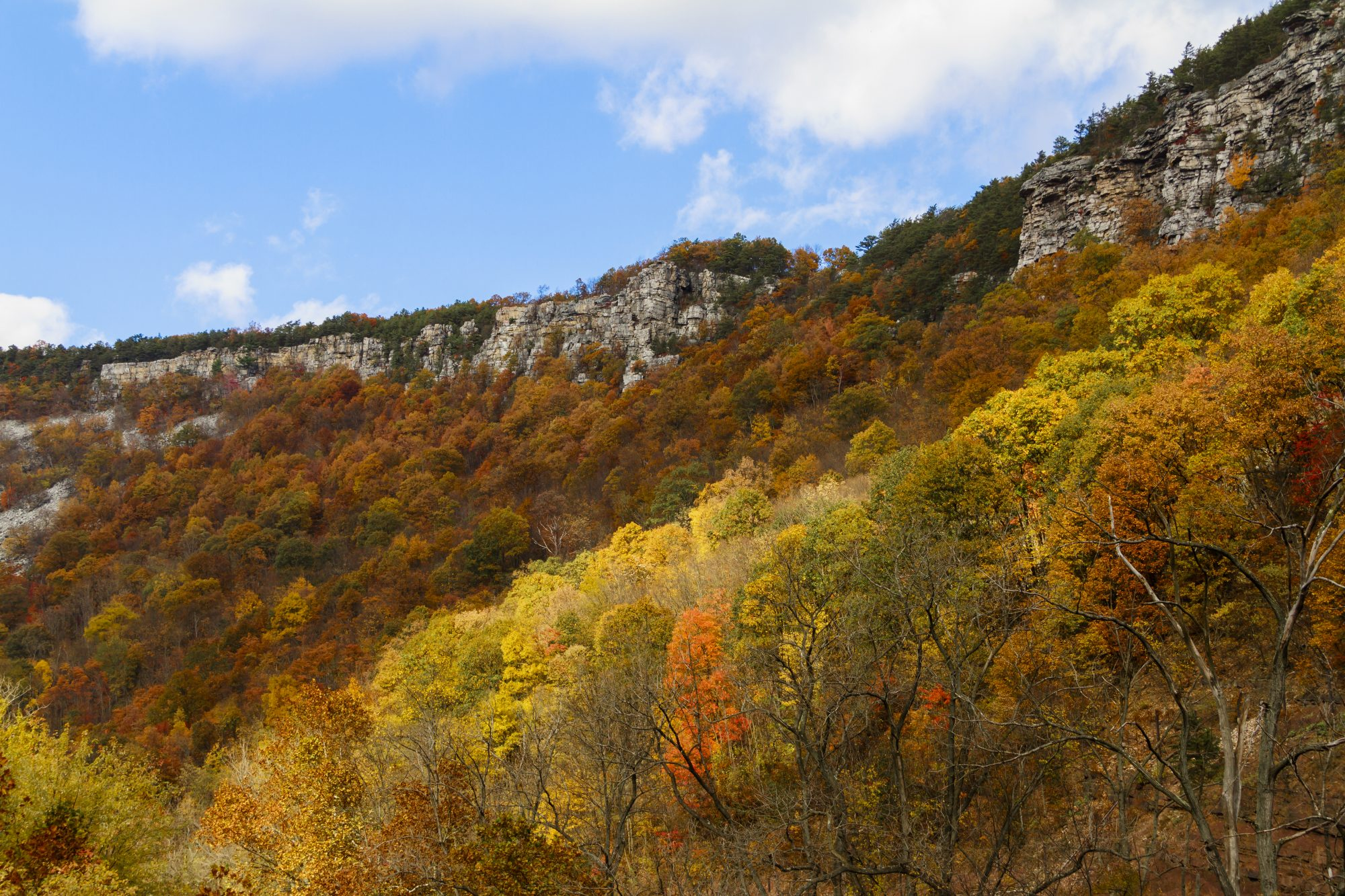 Cumberland Maryland Fall Color