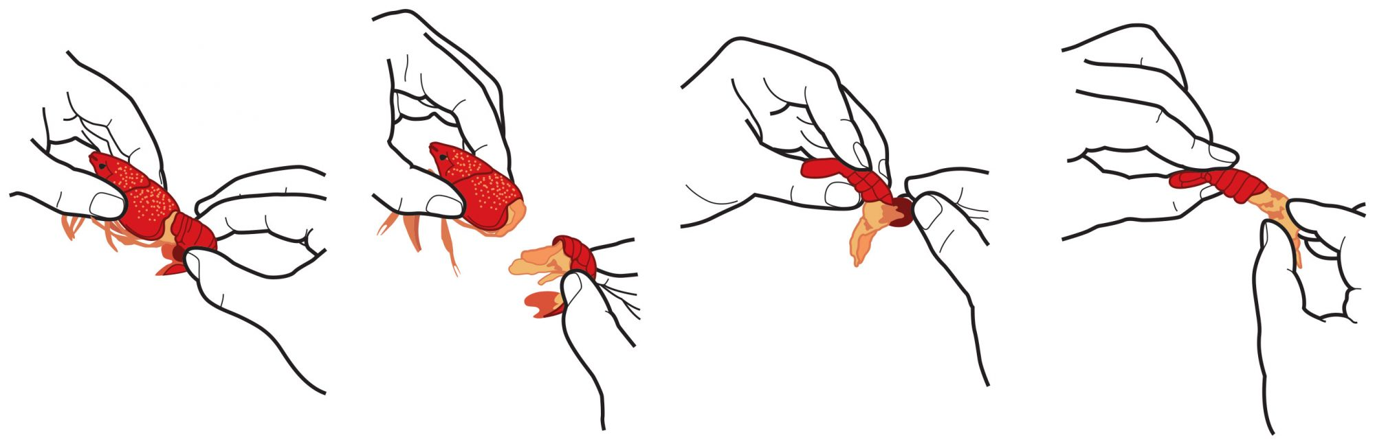 How To Eat Boiled Crawfish: Tug