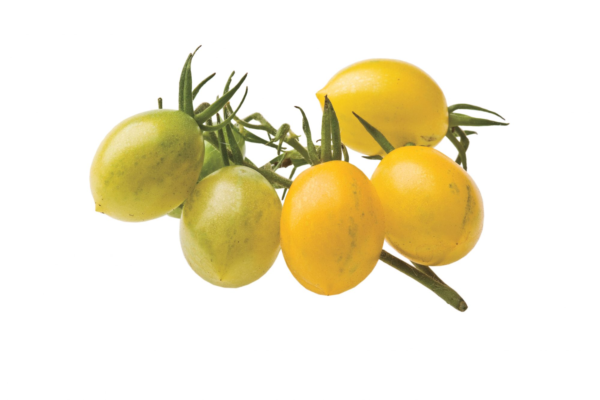 Growing Tiny, Tasty Tomatoes: 'Yellow Grape'