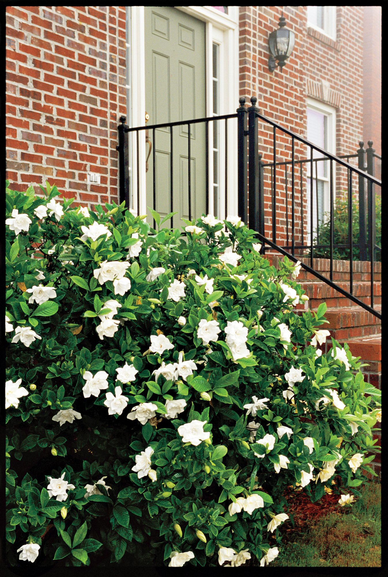 The complete guide to gardenias southern living mightylinksfo