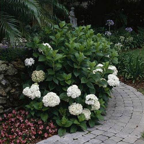 Home Gardening Tips: Pruning Flowering Trees and Shrubs at the Wrong Time