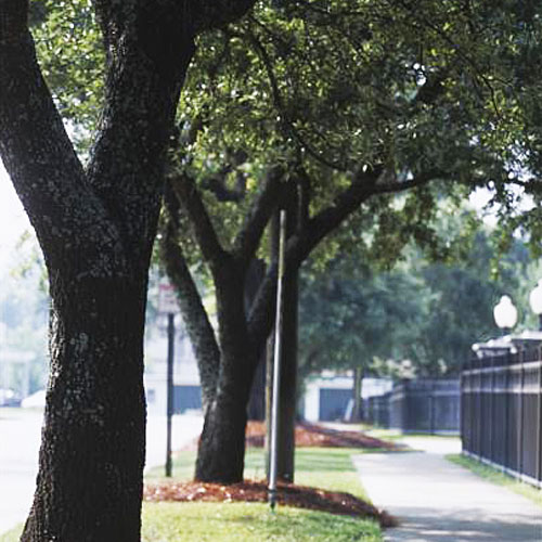 Home Gardening Tips: Planting Shade Trees Between the Sidewalk and Curb
