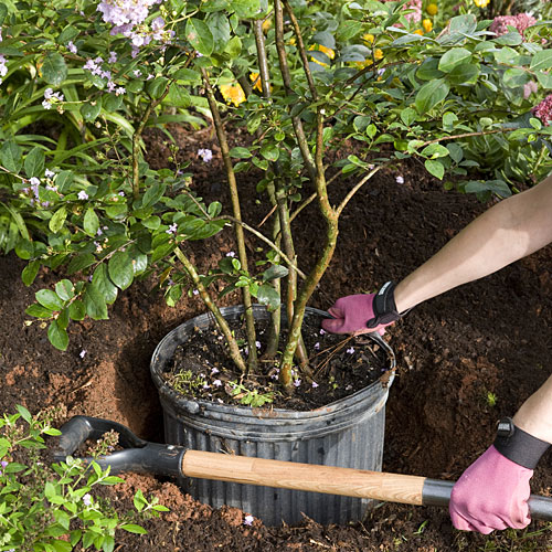 Home Gardening Tips: Planting Trees and Shrubs in Teeny Holes