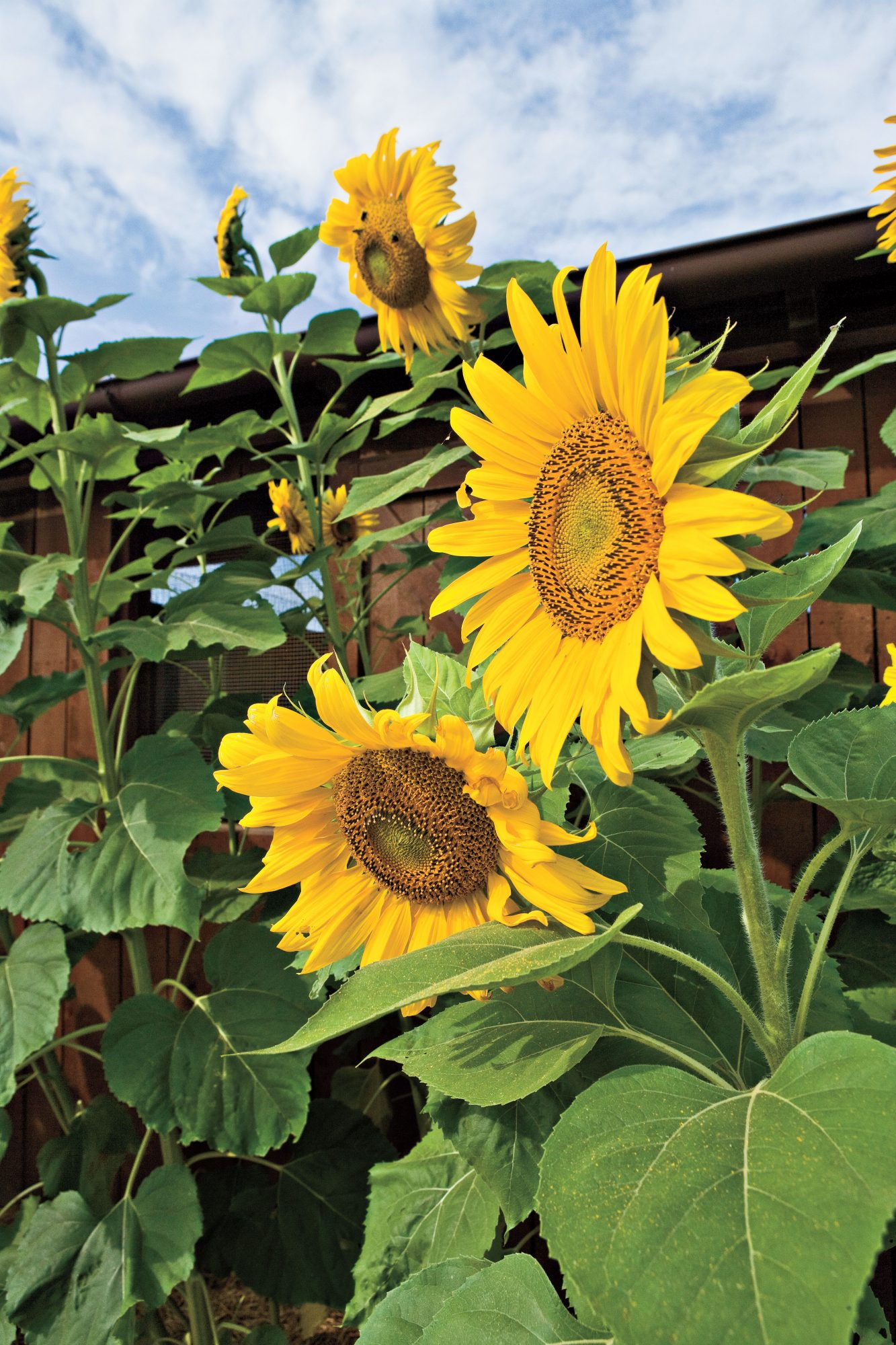These Sunflower Centerpieces Will Brighten Your Breakfast Table Southern Living