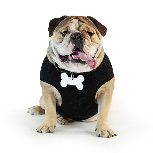 Bow Wow Bouncer