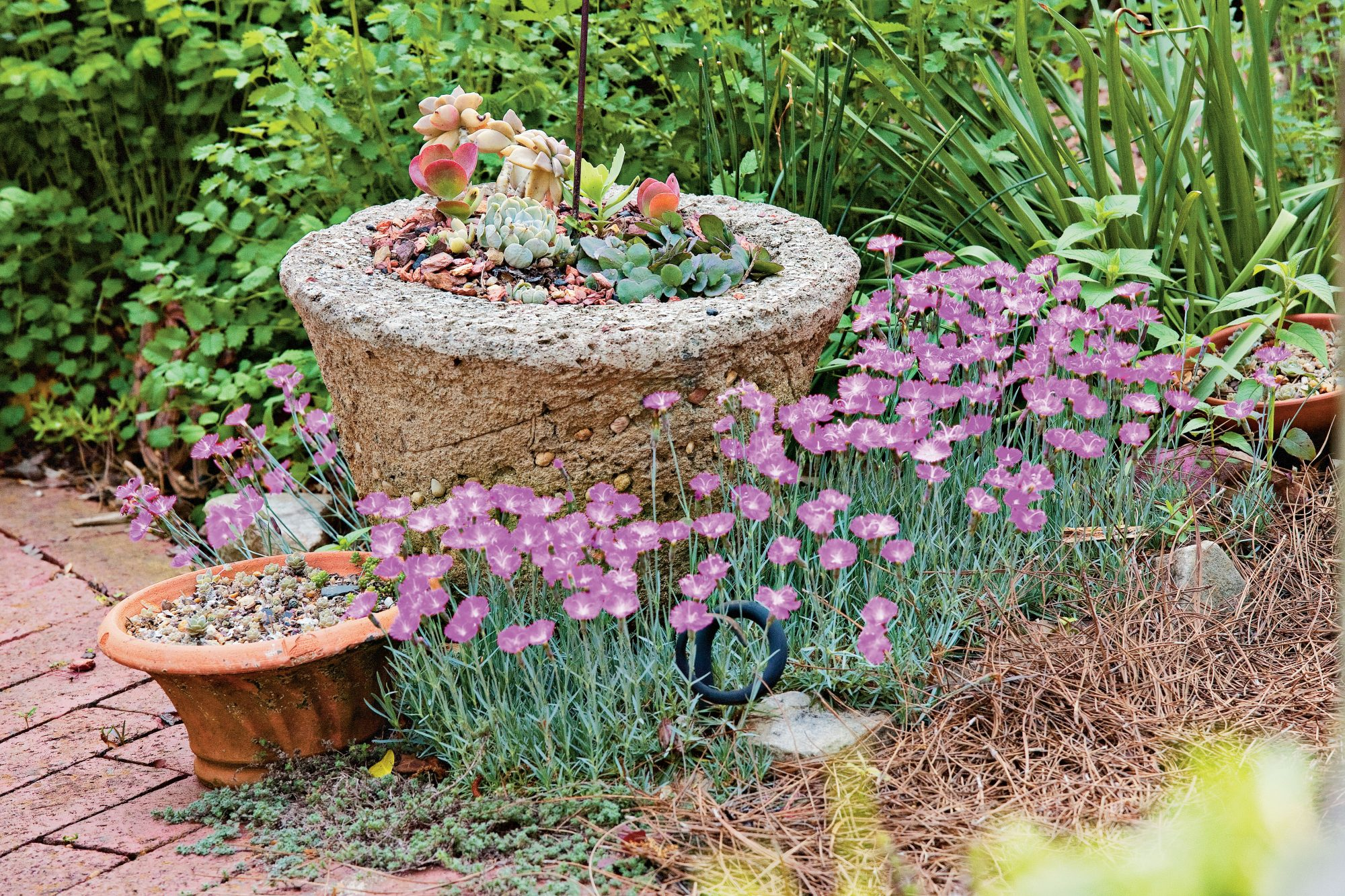 Garden Ideas 2015 spectacular container gardening ideas - southern living