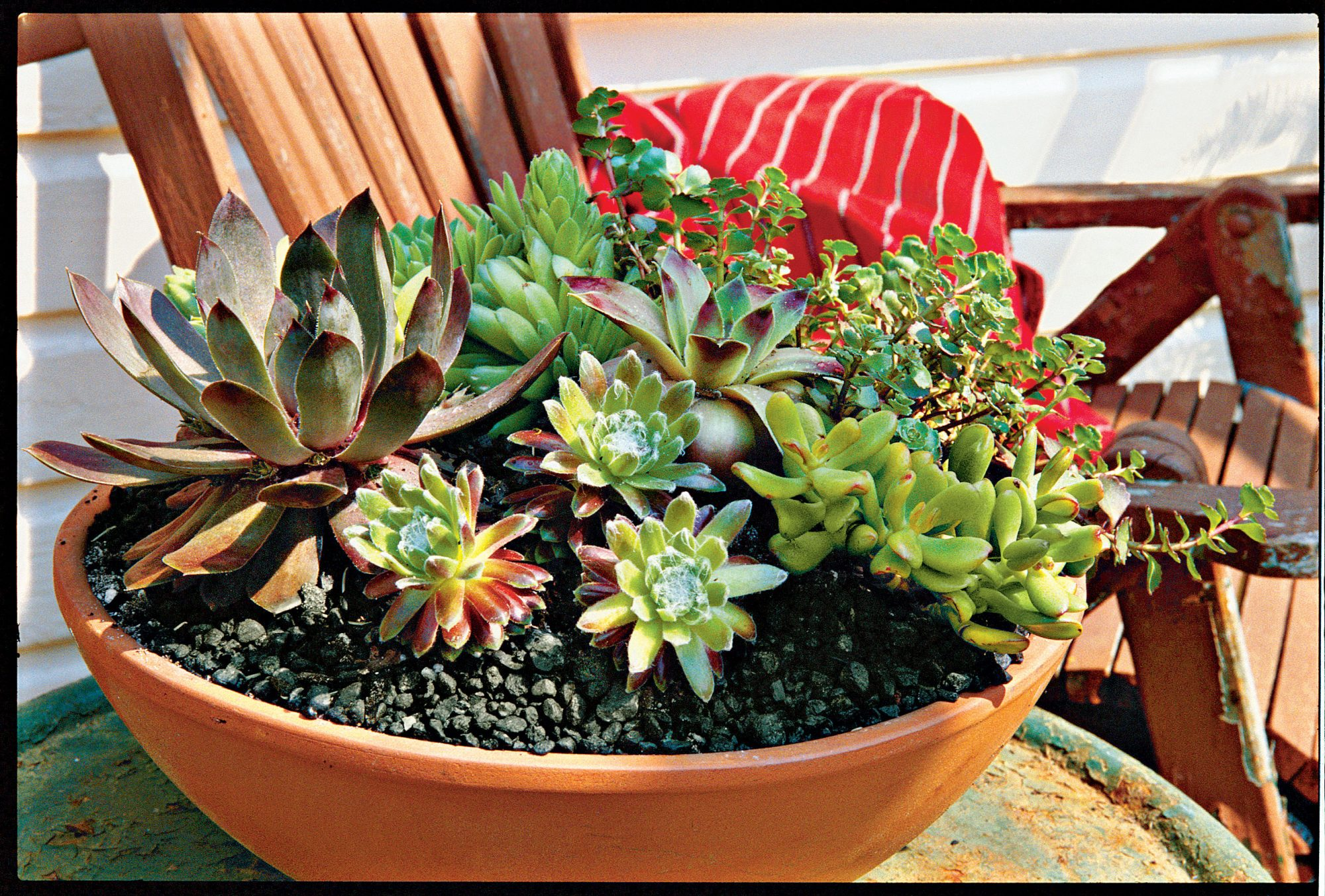 How To Plant Succulents In Containers Southern Living Love Potted Decorative Plants
