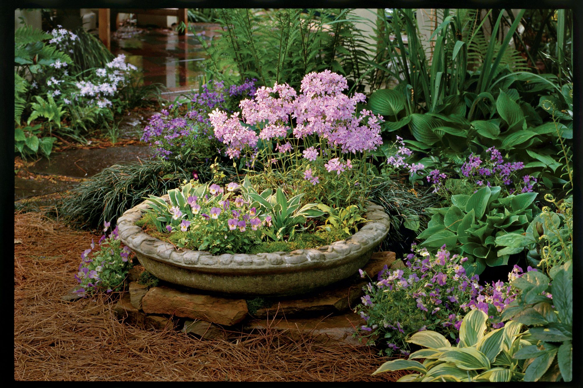 Container Gardening Ideas: Hostas, Violas & _____