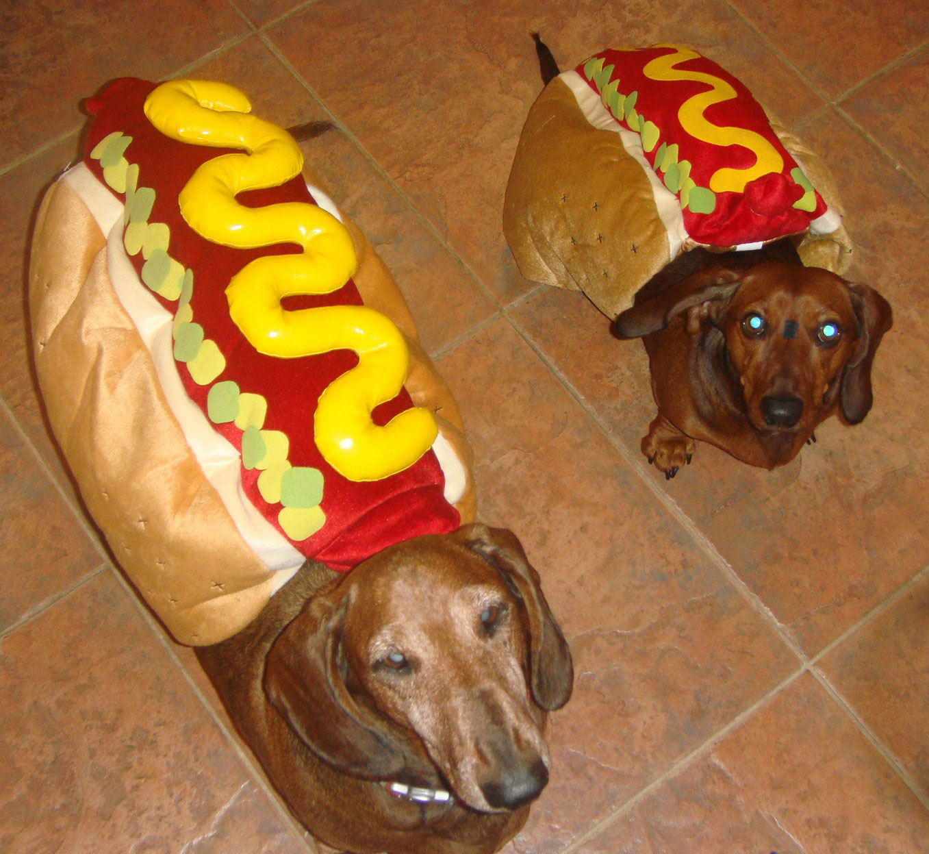 Weeny Dogs