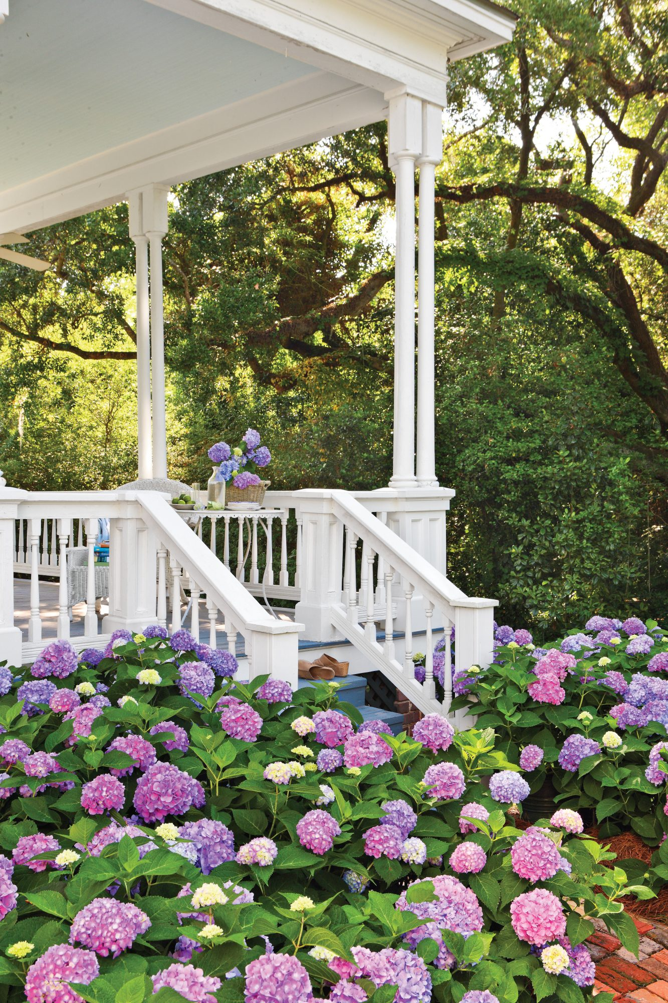 How To Change Your Hydrangea Color Blue Pink White Hydrangeas Southern Living