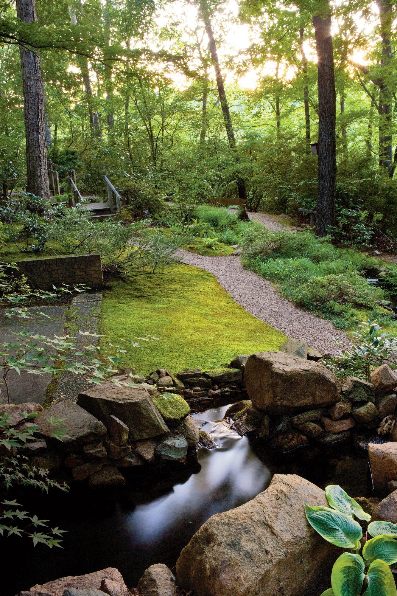 Planting A Moss Lawn Southern Living