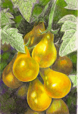 yellow_pear_tomatoes.jpg