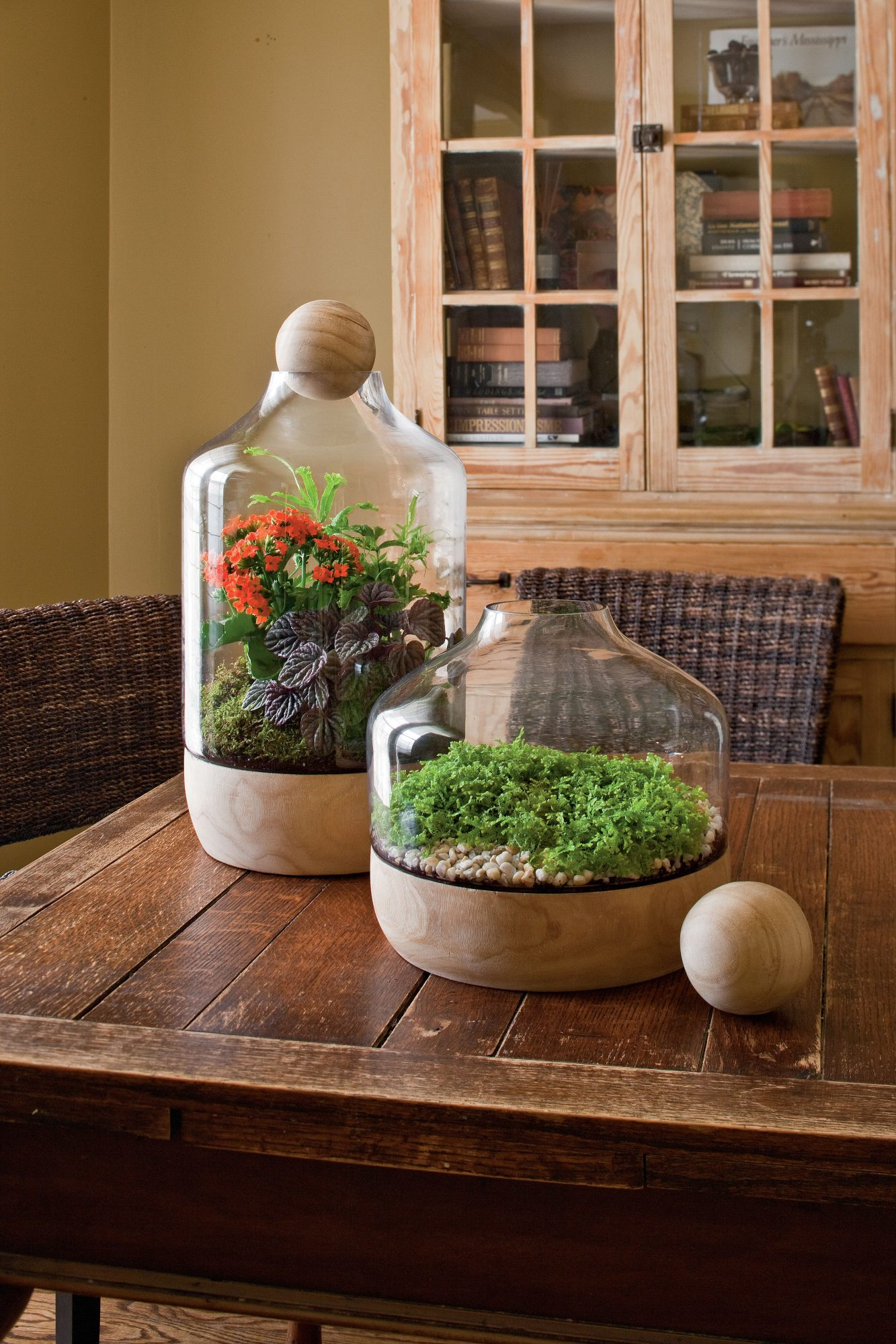 Display a Terrarium