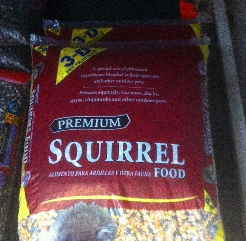 squirrel-food_phixr_phixr.jpg