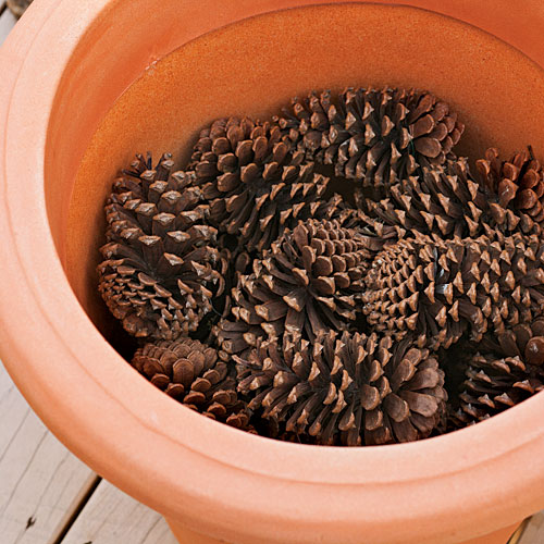 How to Plant Bulbs in a Container: Step One