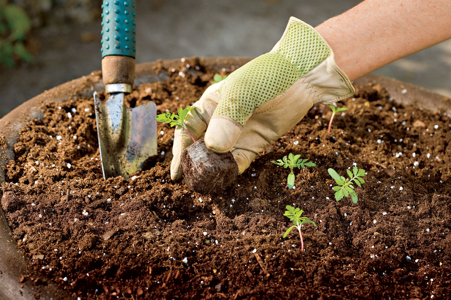The Scoop On Potting Soil Southern Living