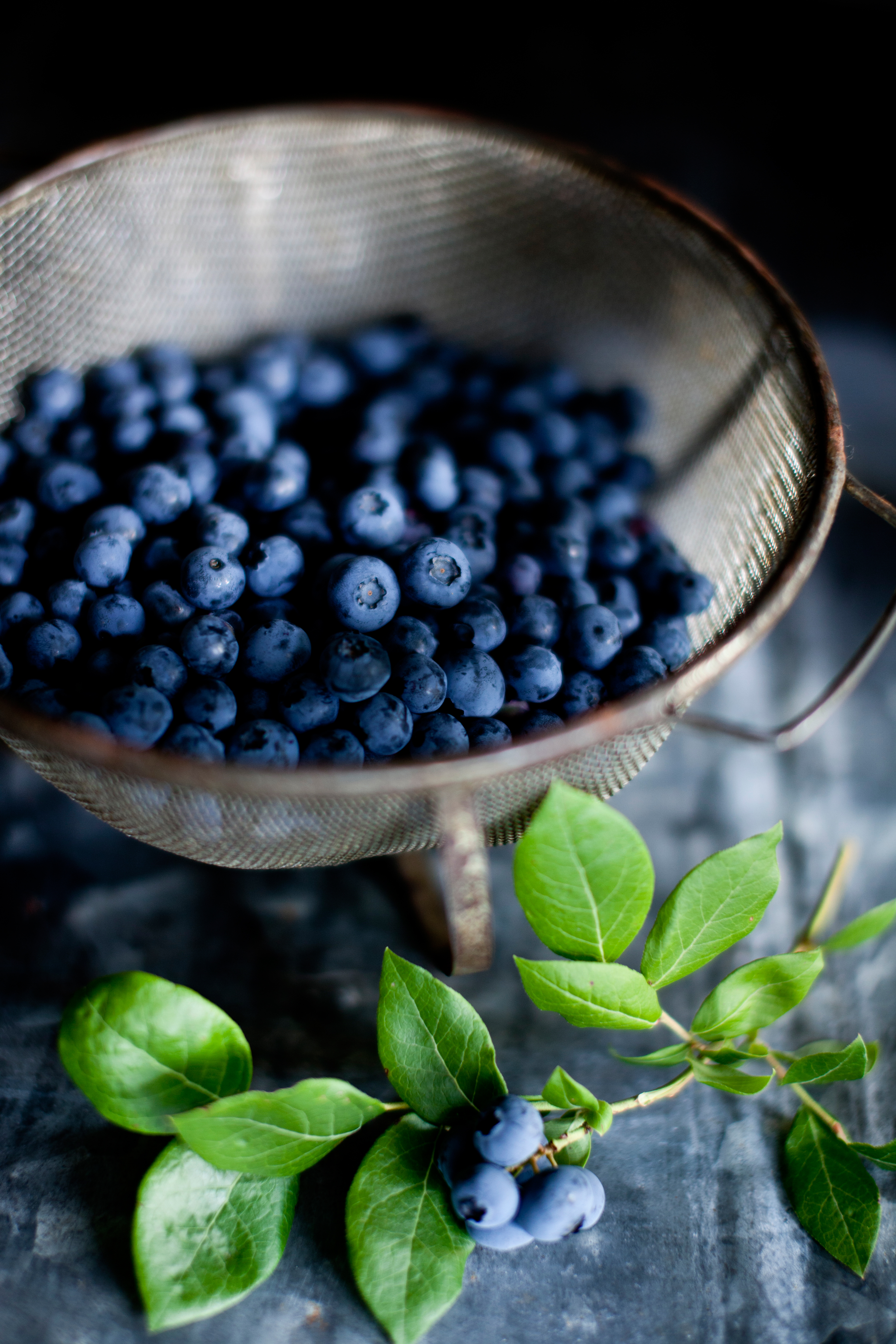Growing Blueberries in a Garden