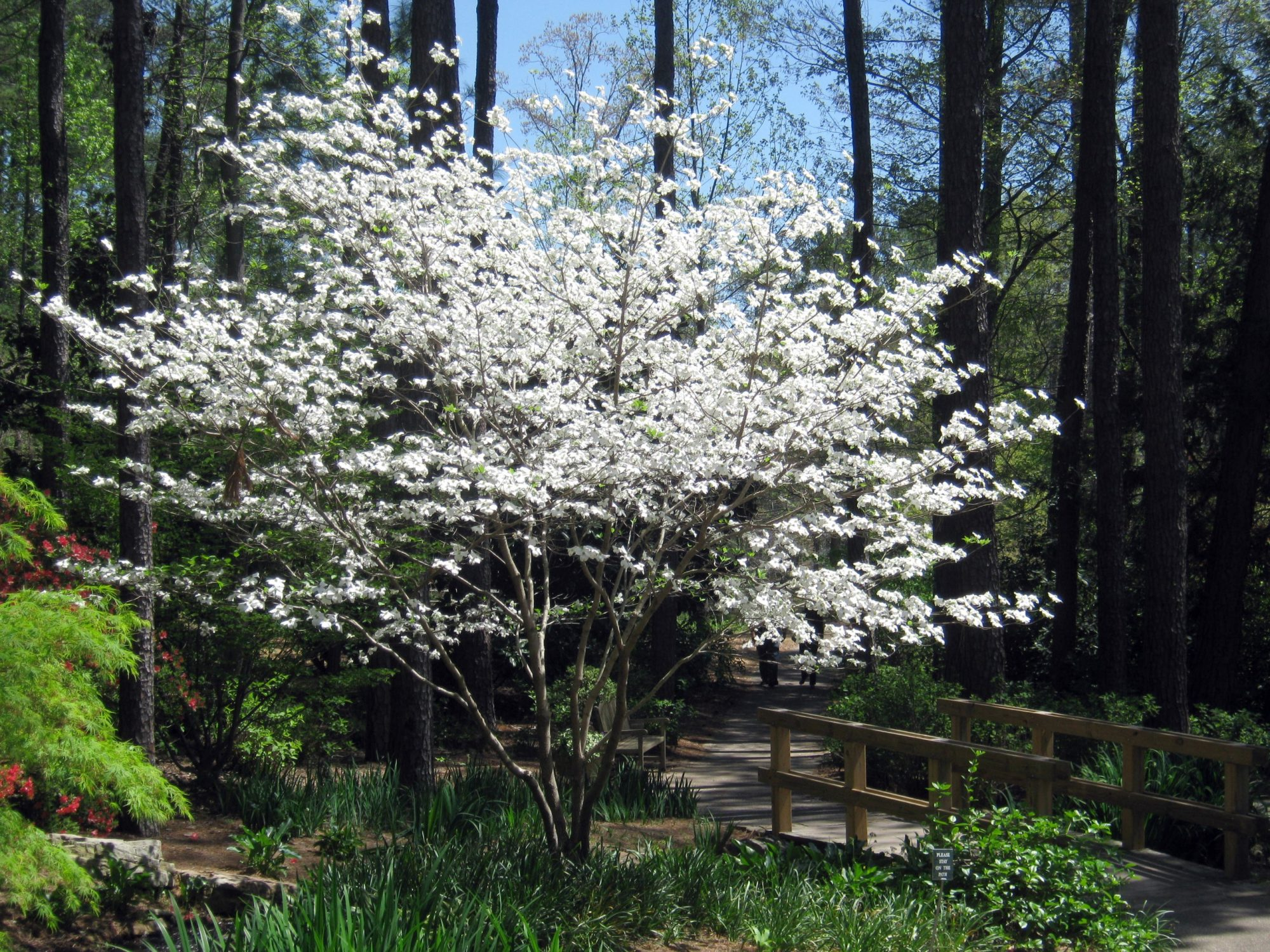 dogwood-004-copy.jpg