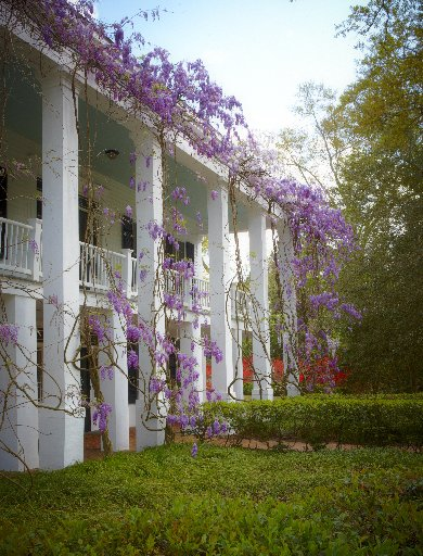 Five monster vines you must never plant southern living 2105801wiste16g mightylinksfo