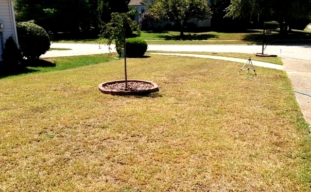 Don't Mow Low! - Southern Living