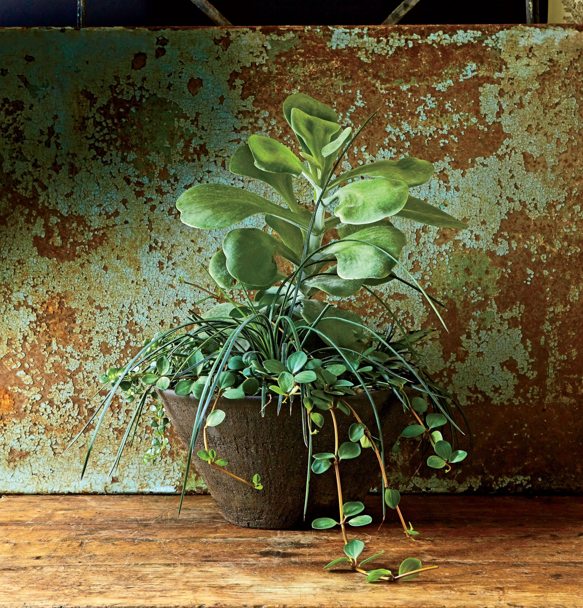 Go Wild with Succulents