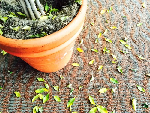 leaves-on-floor-e1421493893735.jpg
