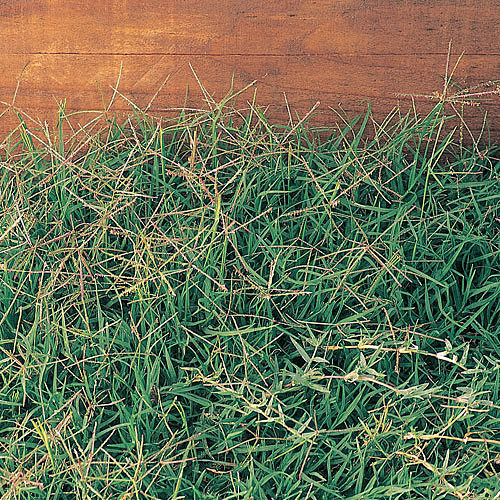 10 Awful Weeds And How To Kill Them Southern Living