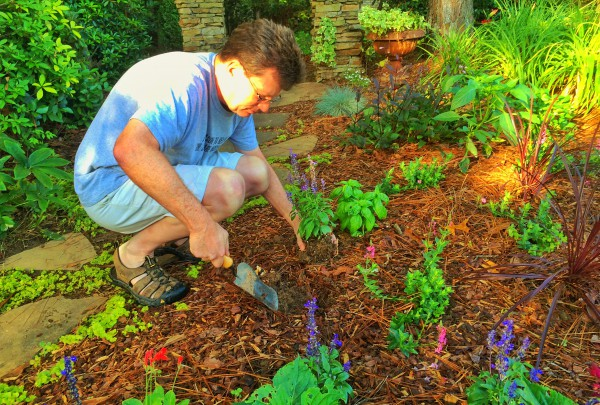 Planting blue salvia in the morning. Photo: Judy Bender