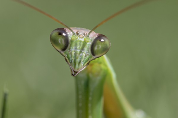 Pet Your Praying Mantis - Southern Living