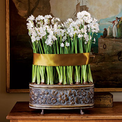 Can your paperwhites be saved southern living mightylinksfo