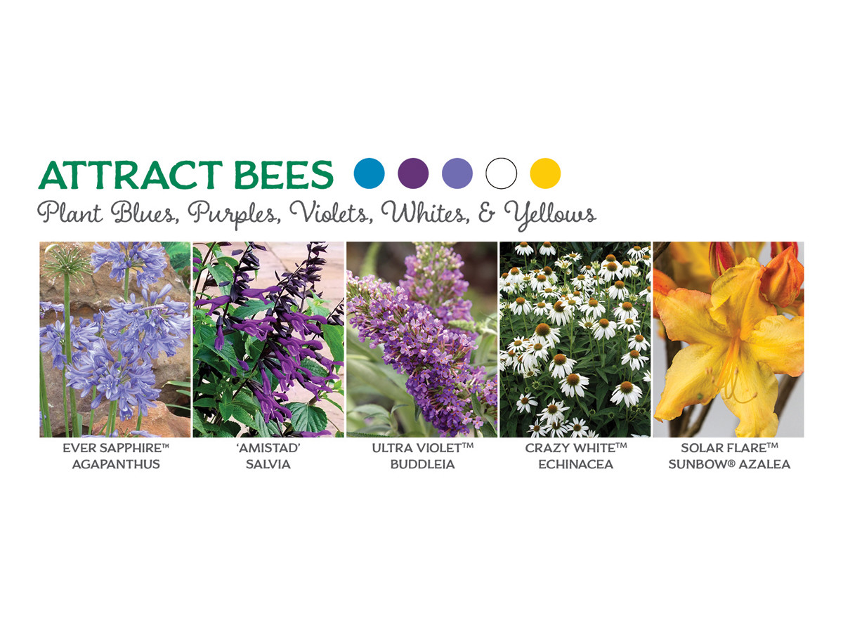 The Best Flowers To Attract Erflies Bees And Hummingbirds