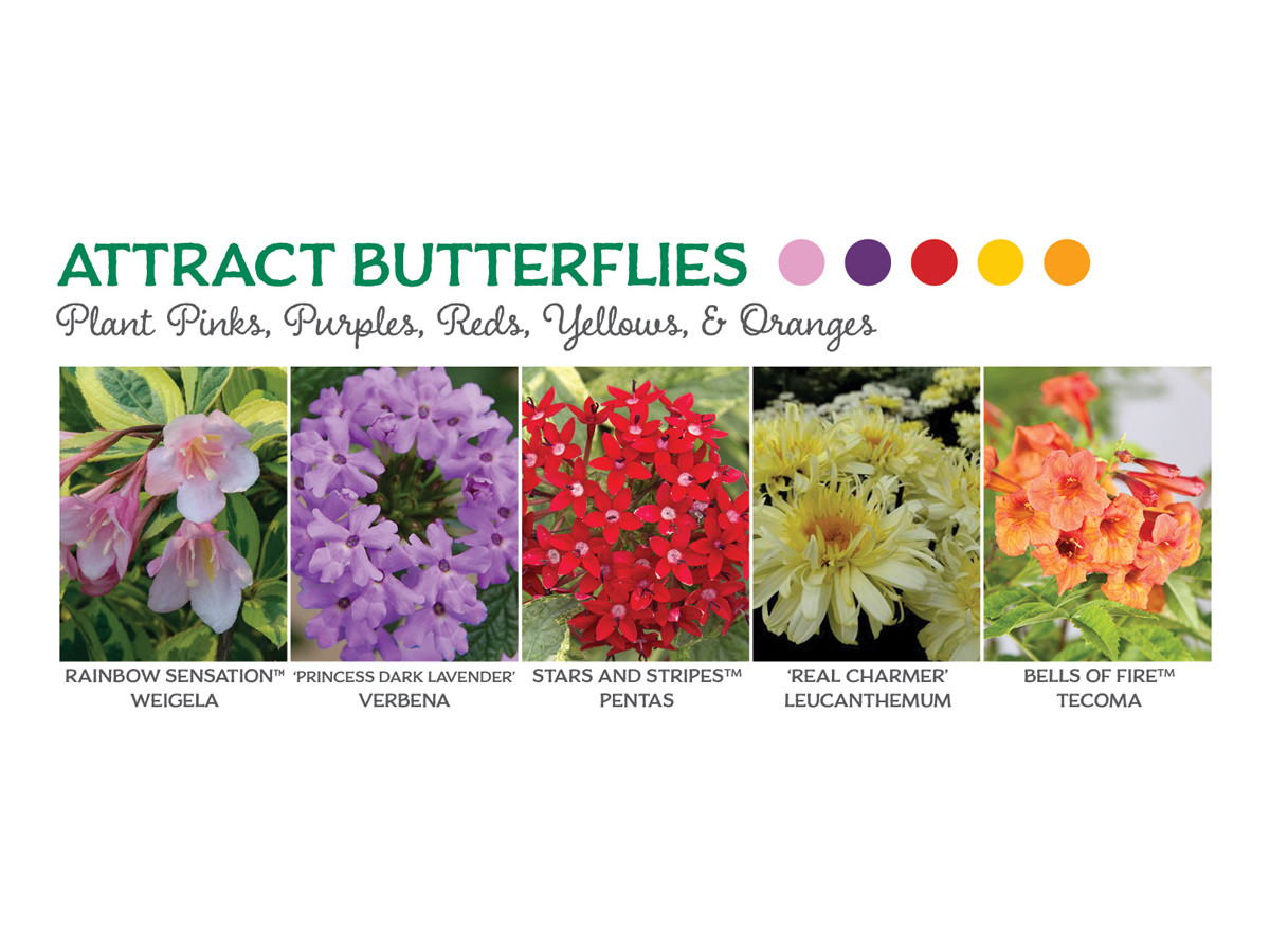 The Best Flowers To Attract Butterflies, Bees, and Hummingbirds ...
