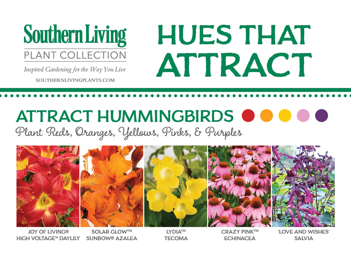 The Best Flowers To Attract Butterflies Bees And Hummingbirds