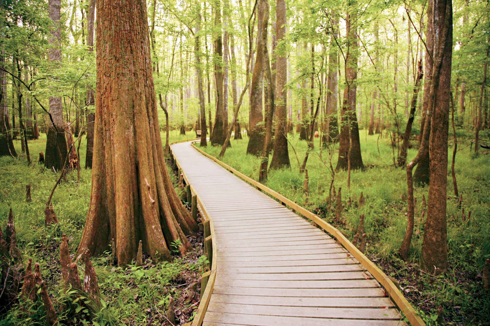 Congaree National Park, South Caorlina