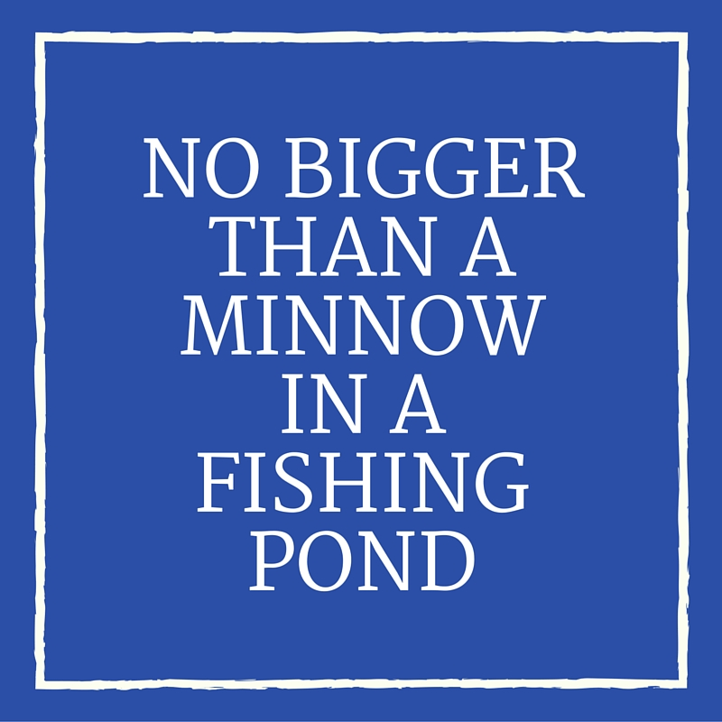 No Bigger Than a Minnow in a Fishing Pond