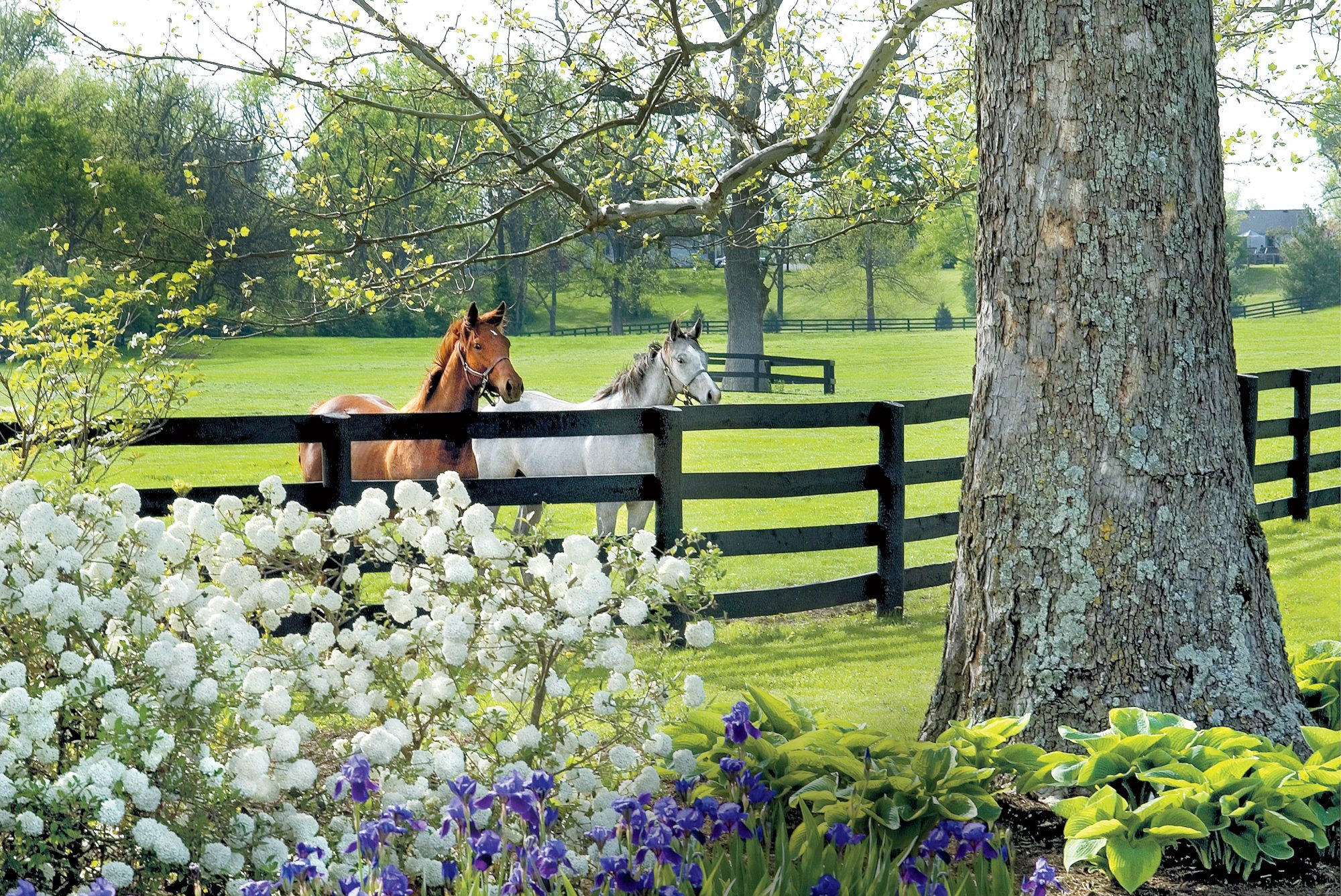 Lexington, Kentucky- Horse Capital of the World