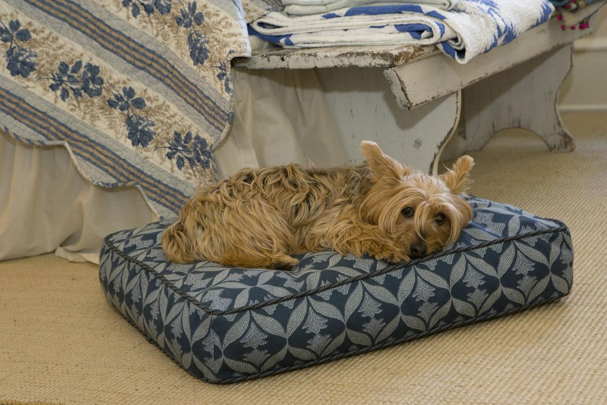 terrier sleeping on dog bed