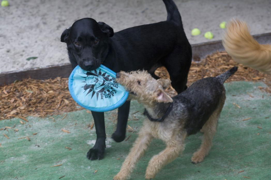two dogs playing with toy