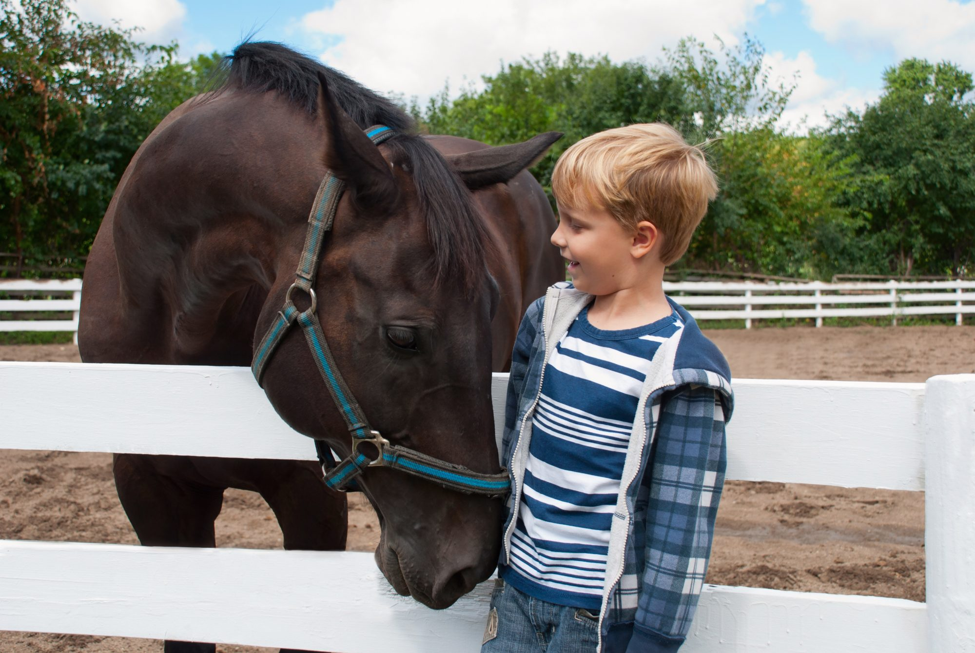 Young boy with brown horse