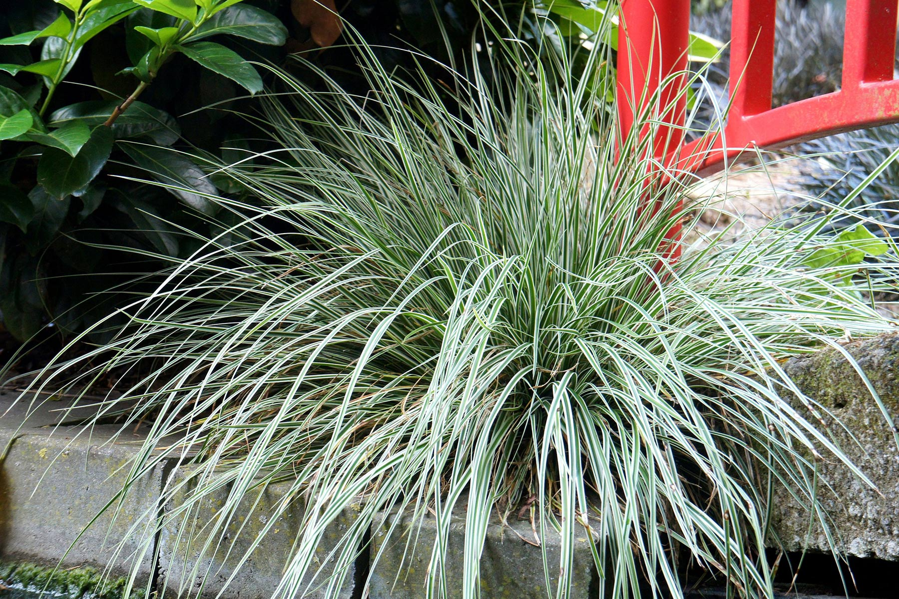 carex_everest_1800x1200.jpg
