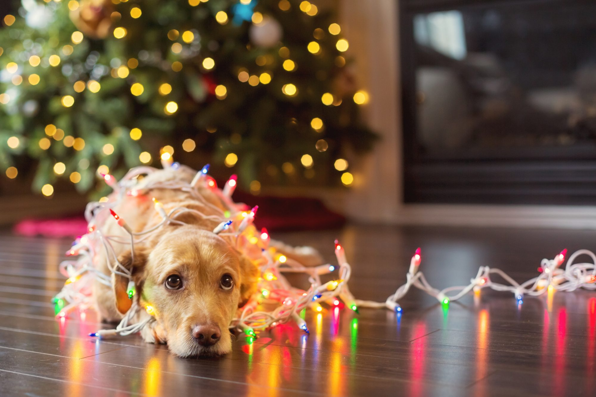 gifts for pets southern living