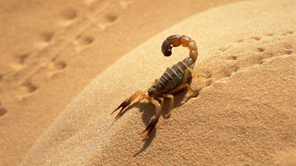 scorpion-running-in-desert-1024x576.jpg
