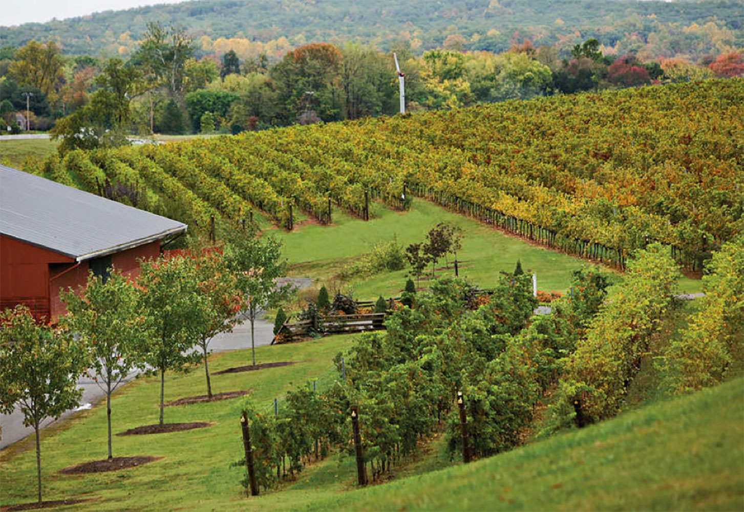 Virginia's Wine Country Hills