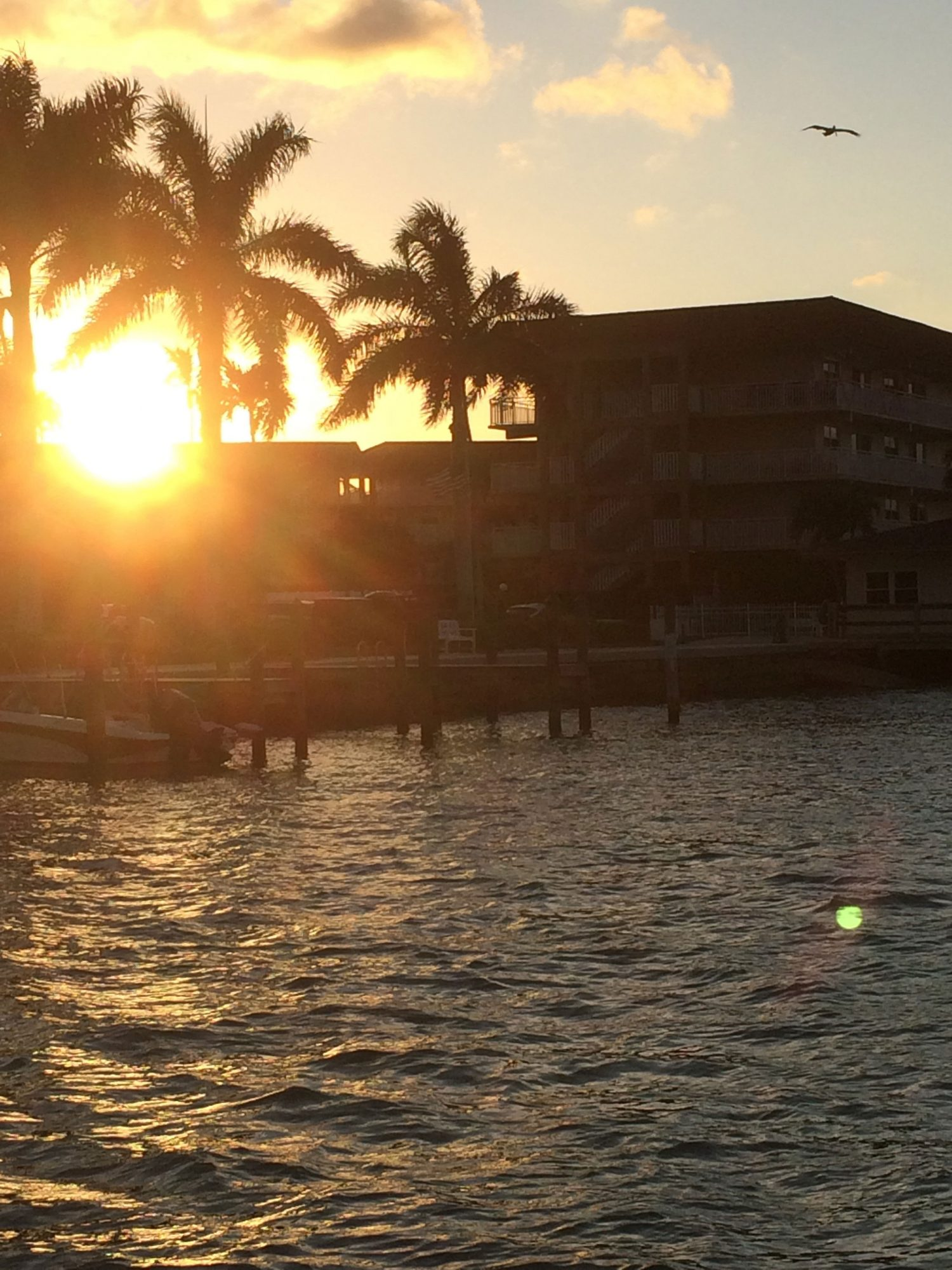 Marco Island Sunset Dolphin Cruise
