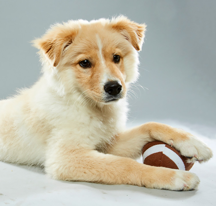 2017 Puppy Bowl: Blitz the Puppy