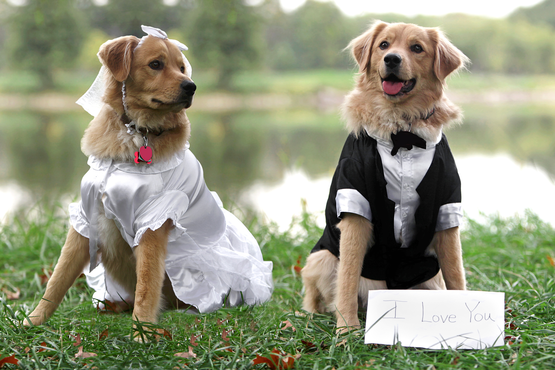 Dogs in Wedding puptials