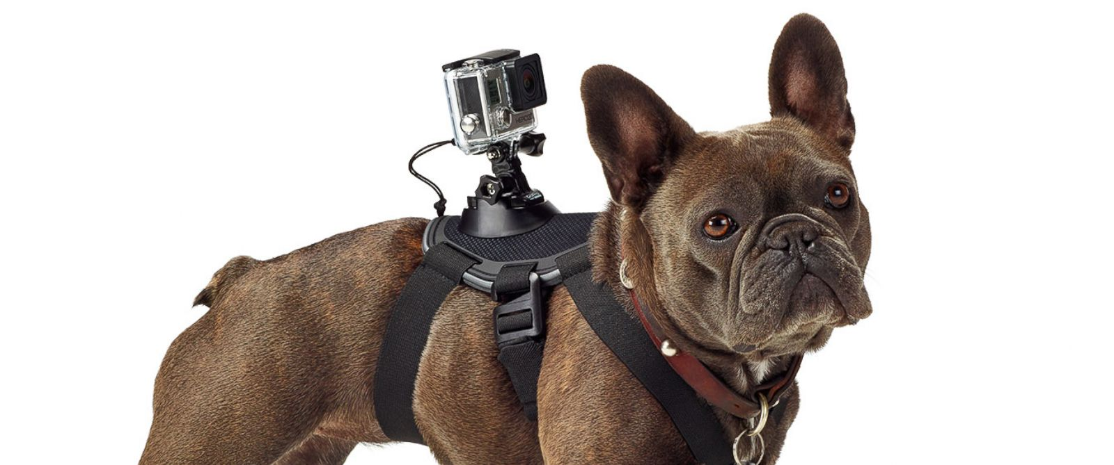 Get a dog's eye view
