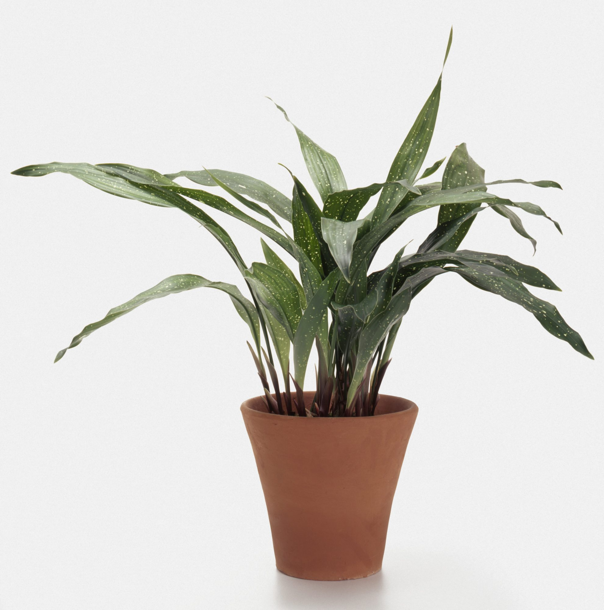 how to pick the perfect houseplants - House Plants