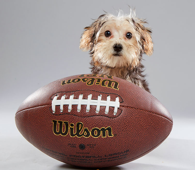 RX_1701_Sports Illustrated_Puppy Bowl_Parfait