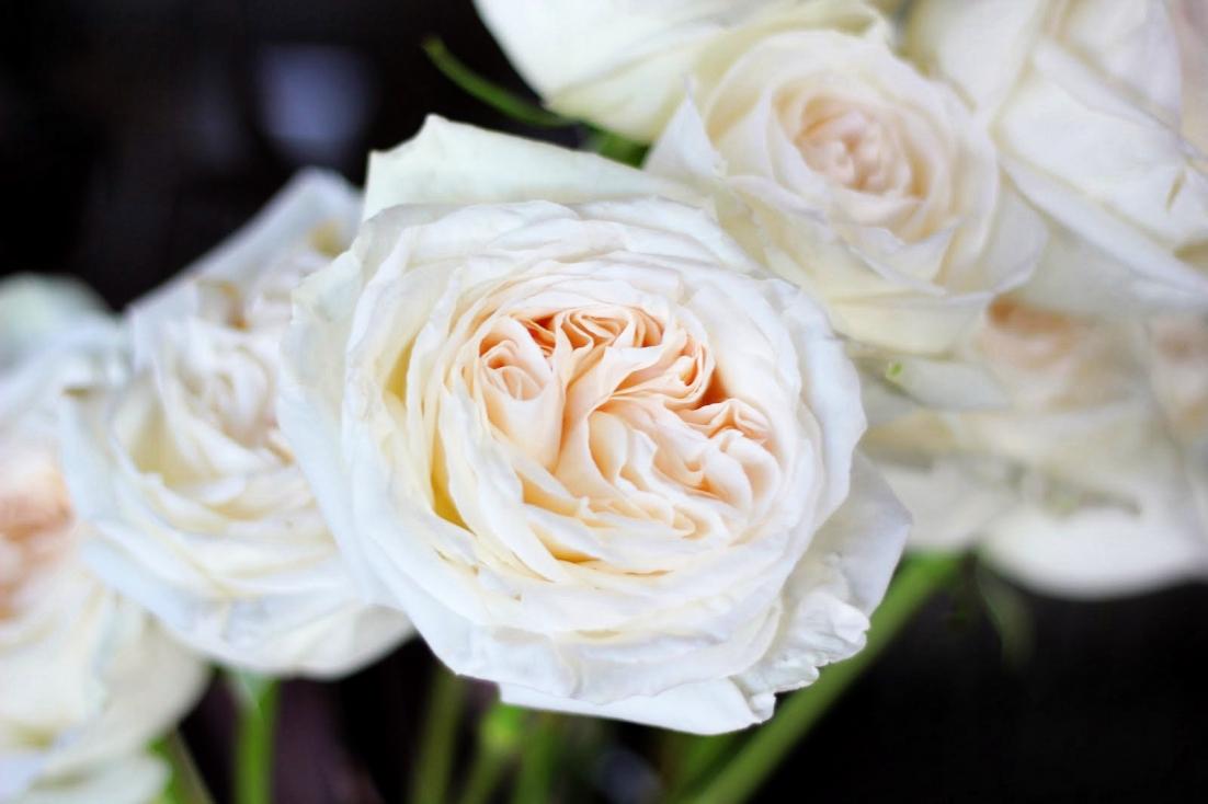White Patience Garden Rose the best roses for wedding bouquets - southern living